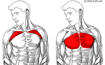 How to Fix Your Posture (NO MORE ROUNDED SHOULDERS!) - YouTube